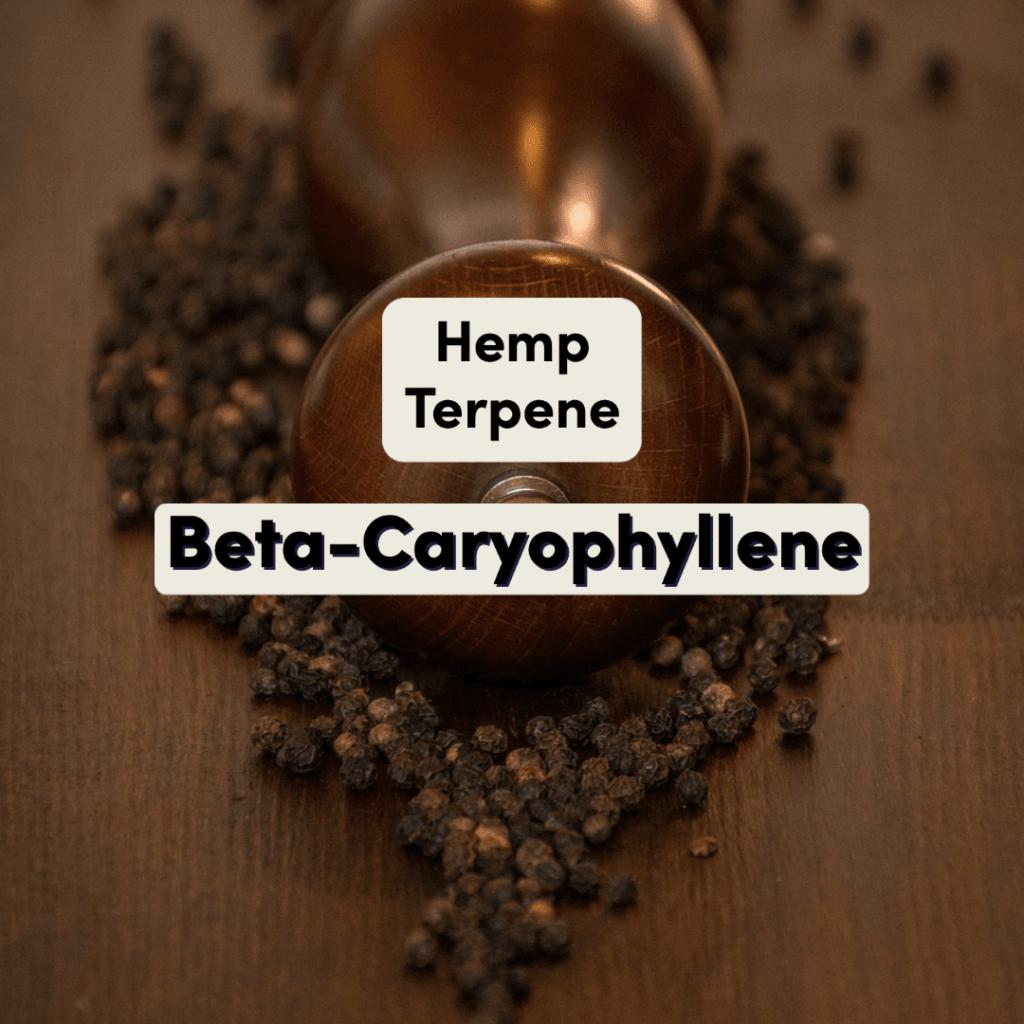 Hemp Terpene Beta-Caryophyllene