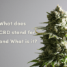 What Does CBD Stand For and What Is It?
